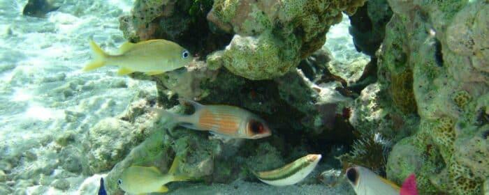 7-jours-dans-larchipel-de-Guadeloupe-4
