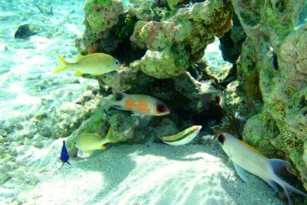 Fonds marins Guadeloupe